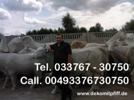 Foto 7 Holstein Deko Kuh ...