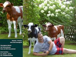 Foto 3 Holstein Deko Kuh oder Deko Pferd und Deko Kalb ….?????