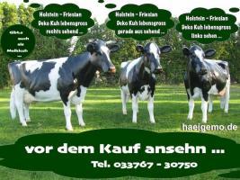 Foto 2 Holstein Friesian Deko Kuh lebensgross … jetzt kaufen und wann kaufst Du ???