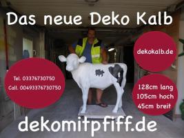 Foto 3 Holstein Kuh …. für deine Messeveranstaltung in Bern ...