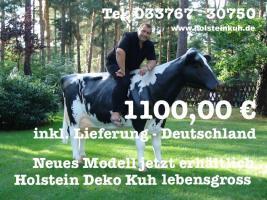 Holstein Kuh lebensgross