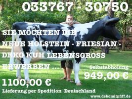 Foto 2 Holstein Kuh lebensgross