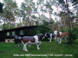 Foto 7 Holstein Kuh lebensgross