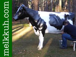 Holstein - Friesian Deko kuh - Neues Modell ….