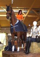 Horse - Pferd - Pferde - Schenken Sie doch mal ein Dekopferd Ihrer Gattin ...
