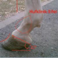 Hufanalyse Beratung bei Pferden mit Hufproblemen