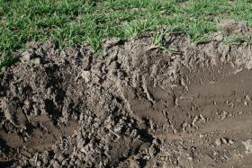 Foto 2 Humus - Erde - Mutterboden