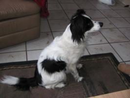 Foto 2 Hund