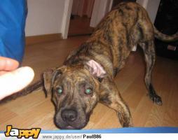 Foto 3 Hund abzugeben + Inventar