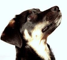 Hund sucht neues Zuhause