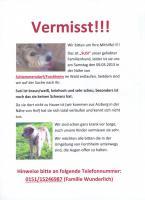 Hund '' Susi'' in Schlammersdorf/ Forchheim entlaufen, wir bitten um Hilfe.