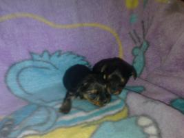 Hunde Babys