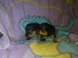 Foto 2 Hunde Babys