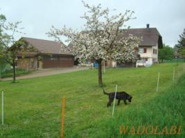 Hunde Ferien auf dem Land mit Qualv. Ausbildung