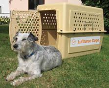 Foto 6 Hunde-Flugtransportboxen-Verkauf-Verleih-Vermietung:Nord-Süd-Handel
