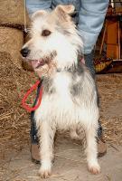 Foto 4 Hunde bei Frankfurt auf Pflegestelle, Bringen auch gern möglich