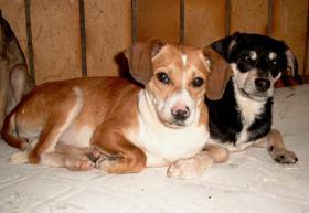 Foto 7 Hunde bei Frankfurt auf Pflegestelle, Bringen auch gern möglich