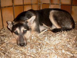 Foto 12 Hunde bei Frankfurt auf Pflegestelle, Bringen auch gern möglich