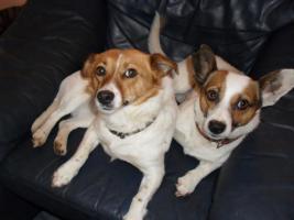 Foto 7 Hunde bei Hannover auf Pflegestelle, Bringen auch gern möglich