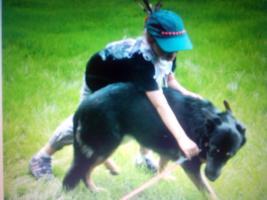 Foto 2 Hunde Herrchen Frauchen Coaching Trainer : Herborn Mittel Hessen