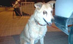 Hunde-Omi IRIS sucht ein Zuhause oder PS