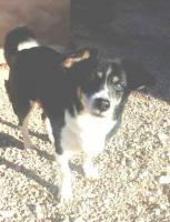 Hunde-Omi SOFI sucht ein Zuhause oder PS