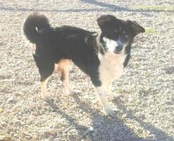 Foto 2 Hunde-Omi SOFI sucht ein Zuhause oder PS