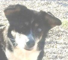 Foto 3 Hunde-Omi SOFI sucht ein Zuhause oder PS