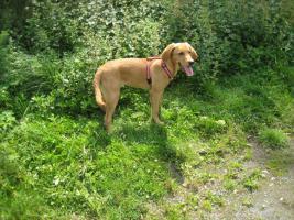 Foto 3 Hunde-Schulung , als, Geschenkgutschein 2013. Hund Mensch Training , Beratung Erziehung Training