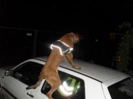 Foto 5 Hunde-Schulung , als, Geschenkgutschein 2013. Hund Mensch Training , Beratung Erziehung Training