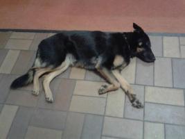 Foto 10 Hunde-Schulung , als, Geschenkgutschein 2013. Hund Mensch Training , Beratung Erziehung Training