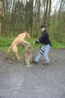 Foto 12 Hunde-Schulung , als, Geschenkgutschein 2013. Hund Mensch Training , Beratung Erziehung Training