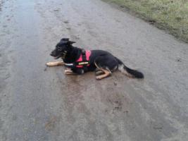 Foto 13 Hunde-Schulung , als, Geschenkgutschein 2013. Hund Mensch Training , Beratung Erziehung Training