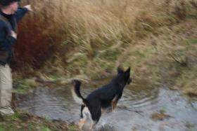 Foto 15 Hunde-Schulung , als, Geschenkgutschein 2013. Hund Mensch Training , Beratung Erziehung Training