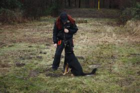 Foto 16 Hunde-Schulung , als, Geschenkgutschein 2013. Hund Mensch Training , Beratung Erziehung Training
