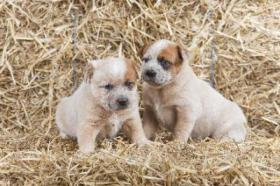 Foto 3 Hunde Welpen