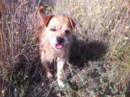Foto 3 Hunde - Opi ROK sucht ein Zuhause oder PS