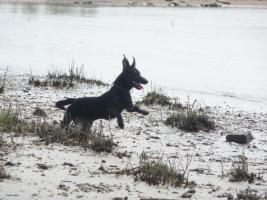 Foto 3 Hundeerziehung-Welpenerziehung-Grundgehorsam
