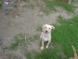 Foto 3 Hundekinder