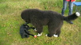 Hundekindergarten-der richtige Weg zur Sozialisierung