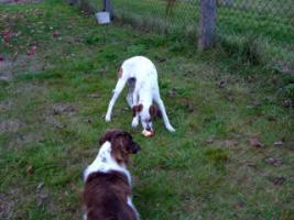 Foto 3 Hundekindergarten-der richtige Weg zur Sozialisierung