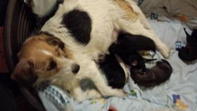 Foto 2 Hundemischlingswelpen abzugeben