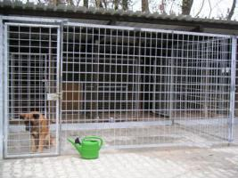 Hundepension-Hundebetreuung-Salostowitz