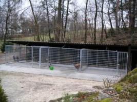 Foto 3 Hundepension-Hundebetreuung-Salostowitz