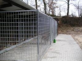 Foto 5 Hundepension-Hundebetreuung-Salostowitz
