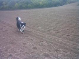 Foto 4 Hundepension in Plaidt