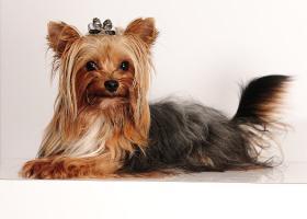 Foto 3 Hundepflege allround auch Hausbesuche möglich