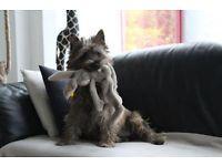 Hundesalon -  Handtrimming von Drahthaar-Hunderassen sowie scheren und schneiden von sonstigen Hunden