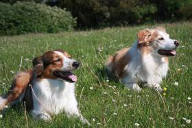 Foto 4 Hundeschule