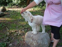 Hundeschule Bremen: Neue Welpenkurse